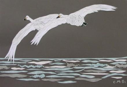 Carolyn Stubbs Bewicks Swans