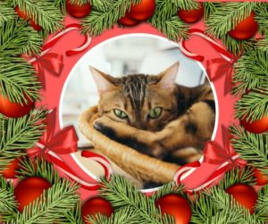 the crazy cat lady christmas is a short festive crime story